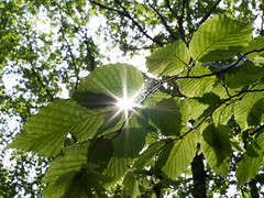 Unterm Blätterdach