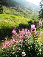 Johnson Canyon Banff Alberta Canada