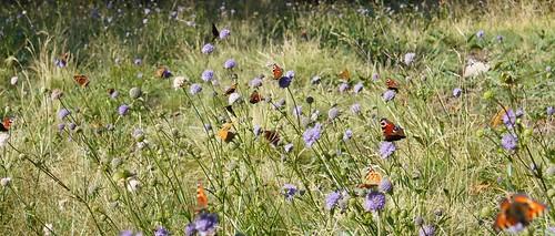 2019.08.06_0020_La clairière aux papillons
