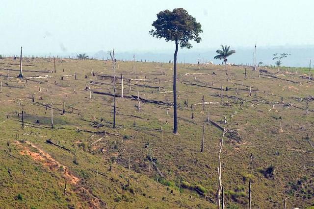 Por conta de técnicas diversas de recuperação de plantas e do monitoramento, quase um milhão de hectares da Mata Atlântica foram regenerados - Créditos: Agência Brasil