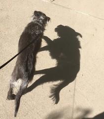 Yoda's shadow
