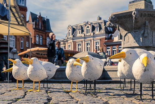 among gulls