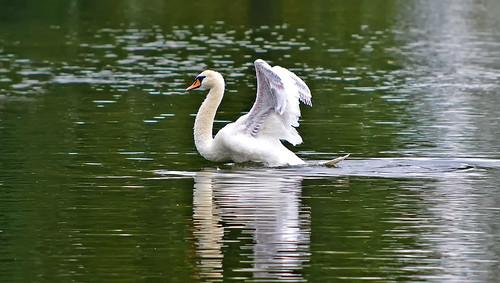 Swan Lake (Part two) 💙 Dancing Queen