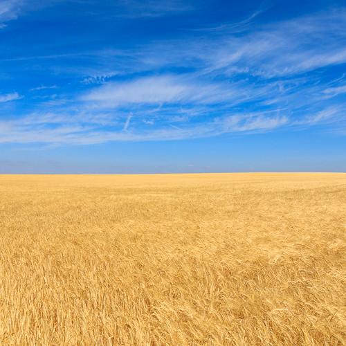 Freyburg landscape