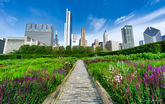 Image by NettyA (7272097@N08) and image name Lurie Garden path, Chicago photo  about Behind Crown Fountain in Mellennium Park, Chicago, is the delightful Lurie Garden. I process my photos with Skylum's Luminar and find it easy to use with great results. Here is a link if anyone is interested in trying it out: skylum.grsm.io/janetteasche8660