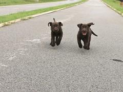 Ike & Izzy