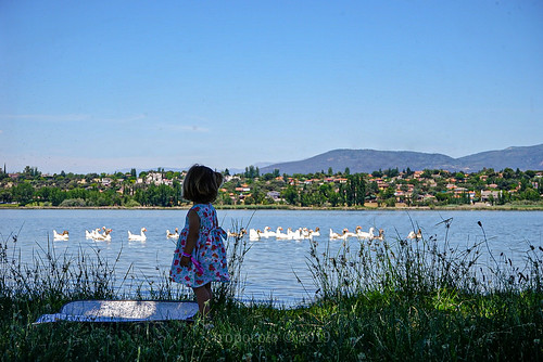 The girl and the ducks