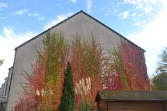 Hauswand in Bonn-Endenich in Herbstfarben (135FJAKA_2434)