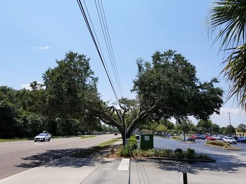 No way to treat a tree!