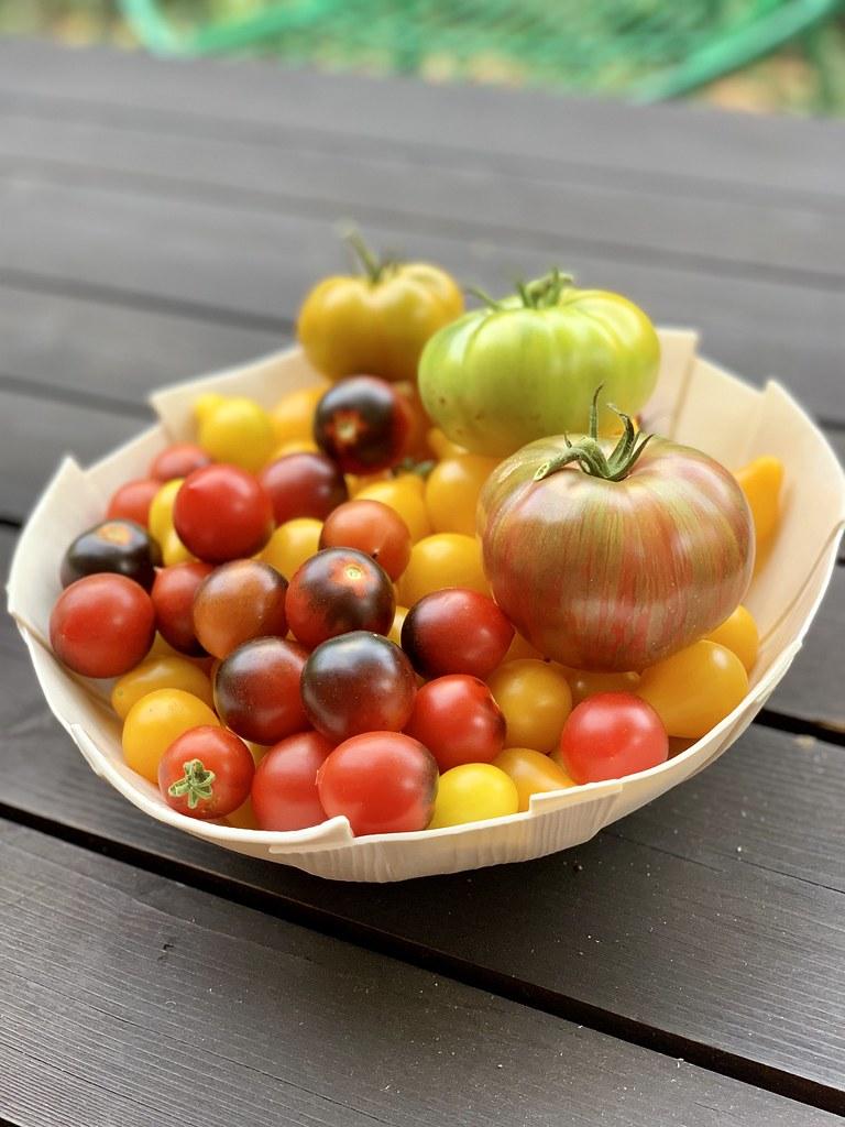 garden tomatoes #heirloomtomatoes #grewitmyself #summergarden / bowl by @abigailmurraystudio