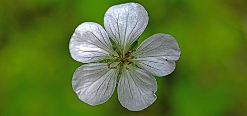 Flower Power RMNP DSC_5031