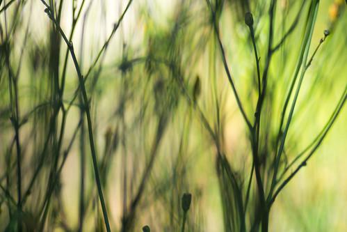 weeds/macro