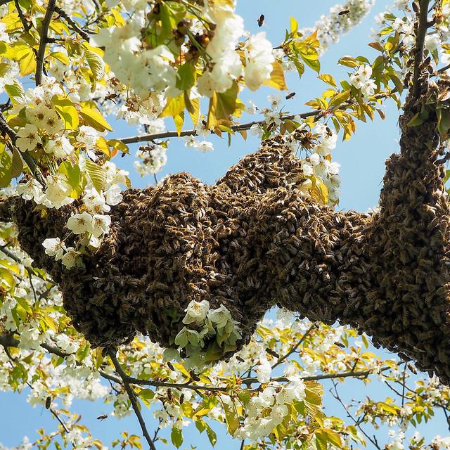 Photo:Smile on Saturday: Bee-autiful! By Gero Brandenburg