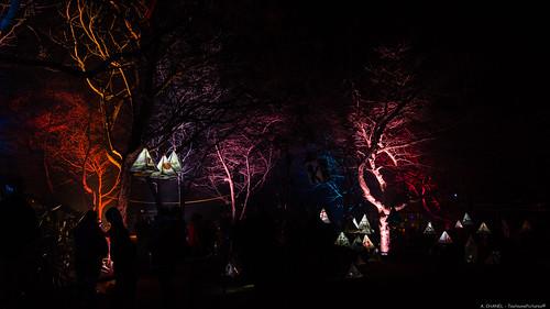 Illumin'Art - Greerton Village - Tauranga