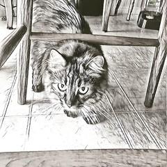 Maisie Prisma'd B+W