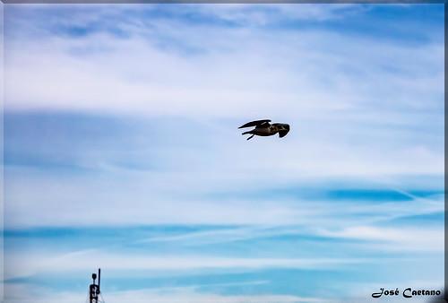 IMG_0614_Fly Away