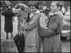 Image by State Library of New South Wales collection (statelibraryofnsw) and image name two girls with dogs, St. Ives Dog Show, 18 March, 1950, Pix Magazine, State Library of New South Wales photo  about Annual Dog Show, St Ives, Sydney, 18 March, 1950, Pix Magazine, State Library of New South Wales, ON 388/Box 004/Item 032 archival.sl.nsw.gov.au/Details/archive/110585570