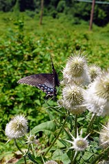 Butterfly With Spiky Flowers