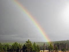 Rainbow (1 August 2019) (Yellowstone, Wyoming, USA) 1