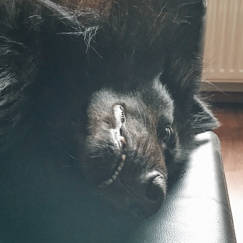 lazy Totoro 🐺