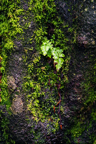 Mossy detail of a tree