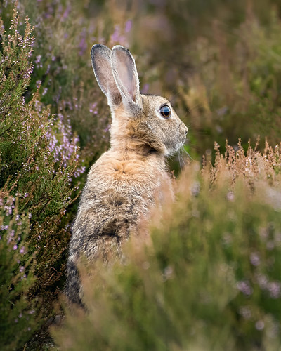Hiding in Heather 1/2