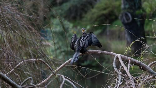Virginia Lake Reserve - Wanganui