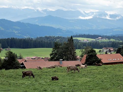 Bavarian landscape ... (N4135)