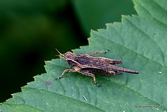 2 - Grasshoppers, Groundhoppers