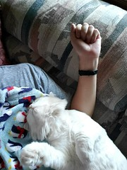 Orlando cuddling me