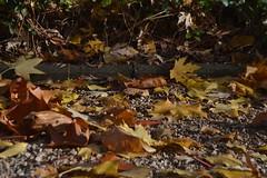 Blätter auf dem Boden eines Spielplatzes in Bonn-Lengsdorf (135FJAKA_2461)