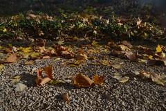 Blätter auf dem Boden eines Spielplatzes in Bonn-Lengsdorf (135FJAKA_2458)