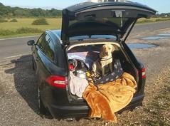 Yogi on his journey home (1)