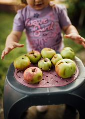 A little girl grasping for the apples