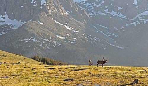 Elk Vista RMNP DSC_6206