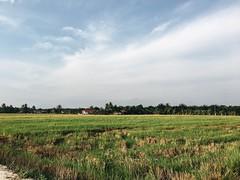 #Malaysia #scenery #vsco #landscape #green #sky