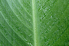 Close-up of a water drop on a green leaf