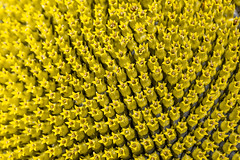 Close-up of the middle of a sunflower flower