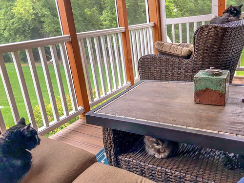 Porch-dwellers