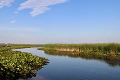 Point Pelee's Wetlands in sunset