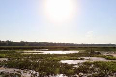 Point Pelee: Wetlands at work!