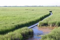 Point Pelee: View of Marsh Boardwalk from The Tower - North view