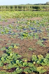 Point Pelee: Wetlands are like sponges