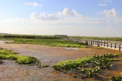 Point Pelee: Wetlands as natural filtering system