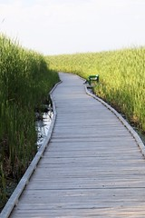 The view path of the Marsh Boardwalk