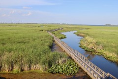Point Pelee: View of Marsh Boardwalk from The Tower - East view