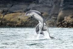 Dolphin Survey trip Aug 3rd 2019