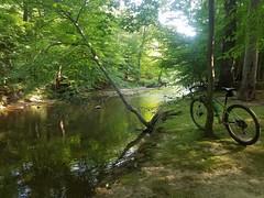 Accotink Creek