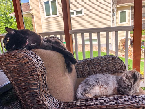 Porch-dwellers, part deux