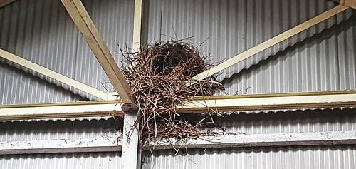 Nest_2